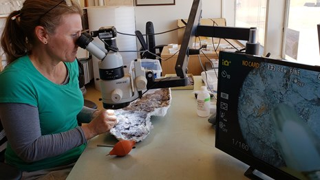 Cathy looks at fossils under the microscope as she prepares them.