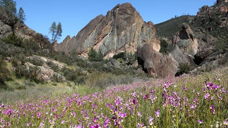 Field of wildflowers in foreground with rock formations in the background.