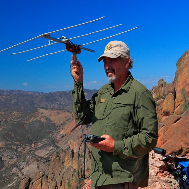 Volunteer tracking condors.
