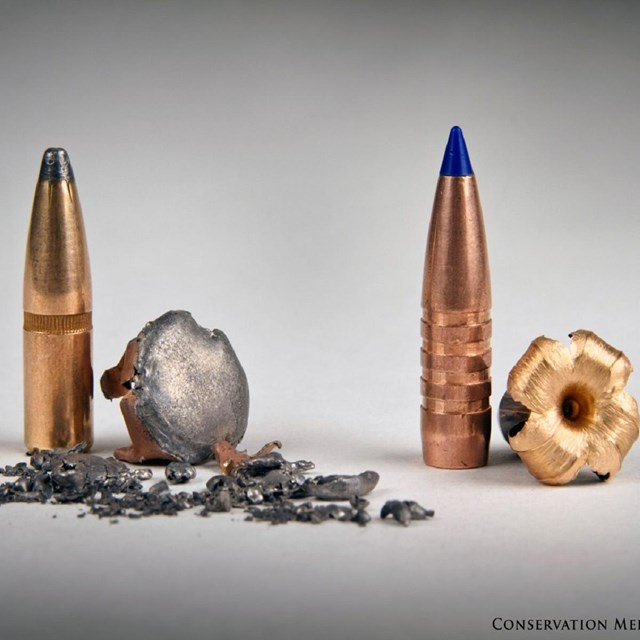 Lead vs. nonlead bullets.
