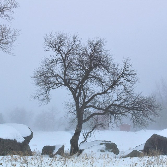 3 large, snow-covered boulders with a tree between them