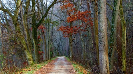 Unpaved trail in a late fall, wooded setting. Leaves are off the trees. (Photo Credit: Amy Allen)