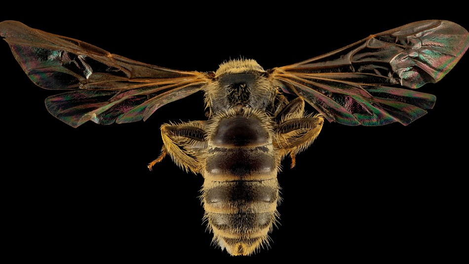 A close-up image of a bee