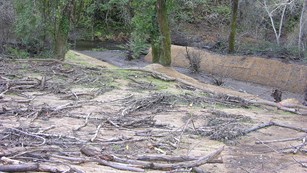 A newly dug channel branches off of a creek. Cut branches and other material covers the ground.