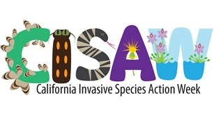 A cartoon of the letters C, I, S, A, and W made from different invasive species.
