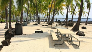 Coconut trees provide shade in the sunny picnic area
