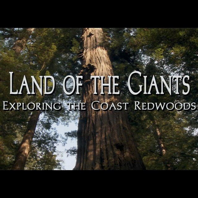 See and hear the dramatic scenery on the Redwood Coast