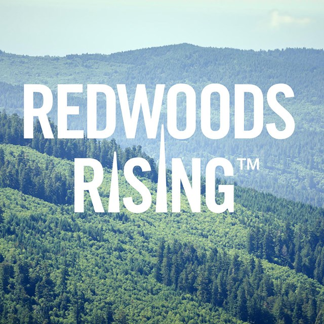 FAQs about the Redwoods Rising restoration project