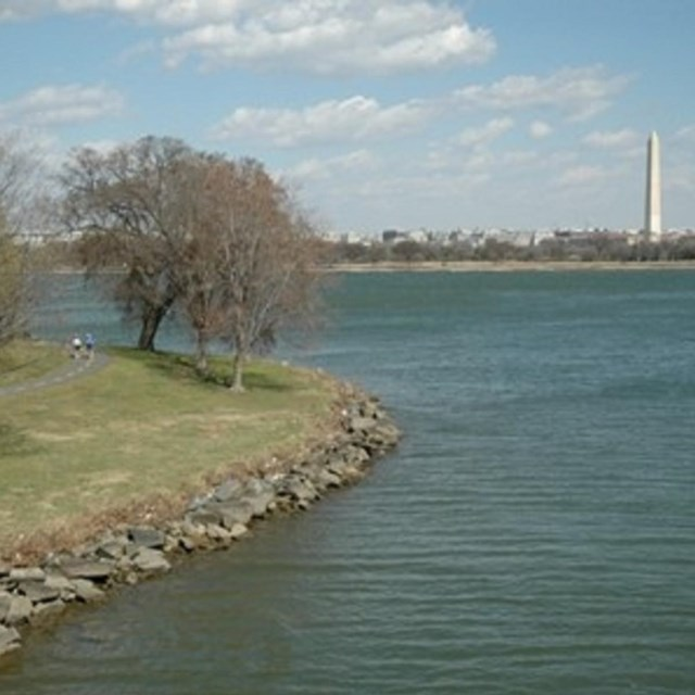 Joggers around the Tidal Basin