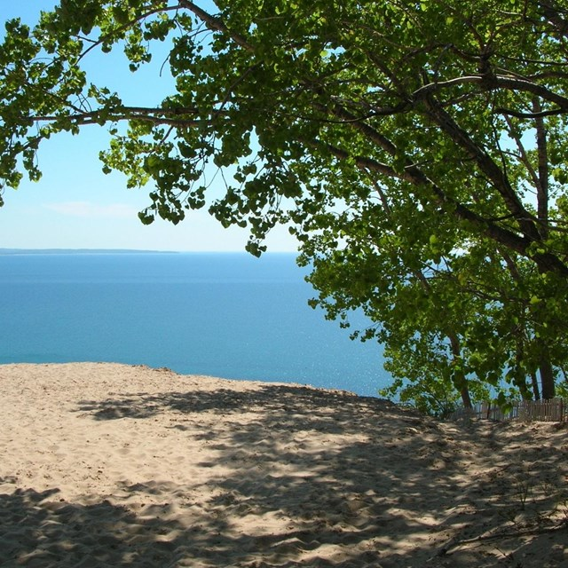 Lake Michigan, Sand Dunes, and a Cottonwood Tree at the Lake Michigan Overlook