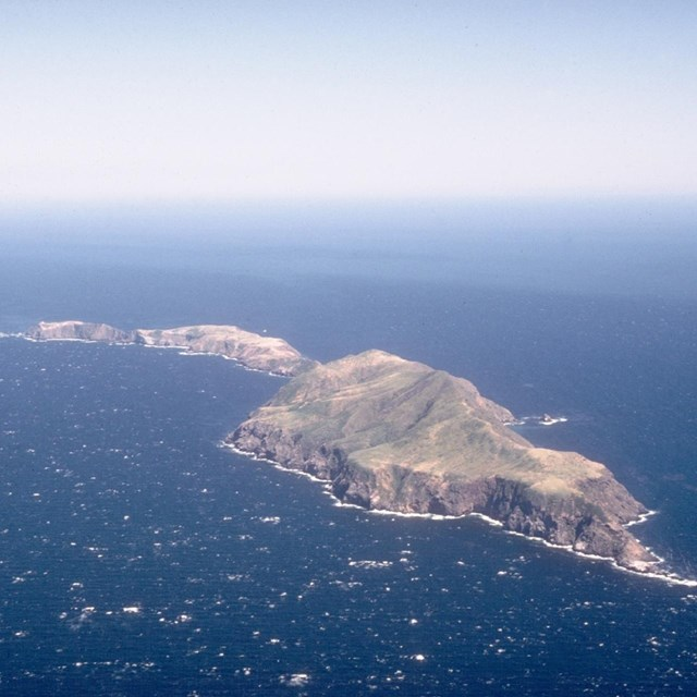 Anacapa Island's steep, isolated slopes provide excellent nesting sites.