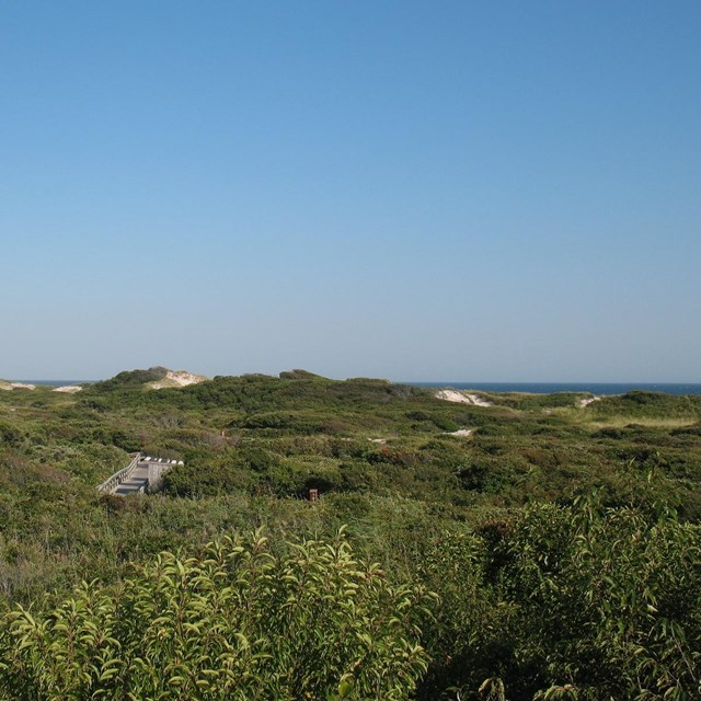 High dunes and a glimpse of the Atlantic Ocean are in the background