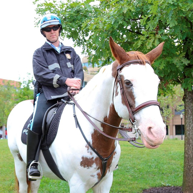 A park police officer sits on a horse at Rock Creek Park Day.