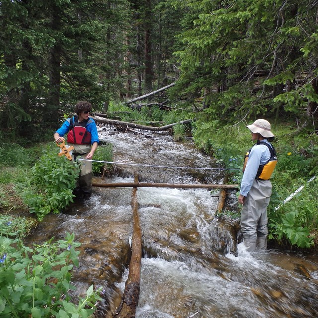 Stream Ecological Integrity monitoring in Rocky Mountain NP.