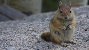 Mammals - Rocky Mountain National Park (U S  National Park