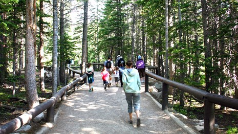 Visitors hike through the forest.