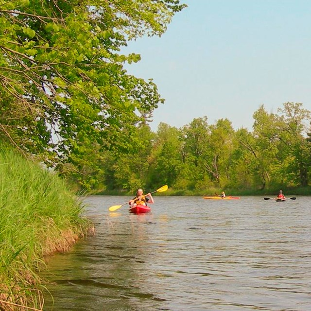 Kayakers paddle past a forested landscape.