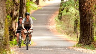 Two bicyclists riding on a forested road.