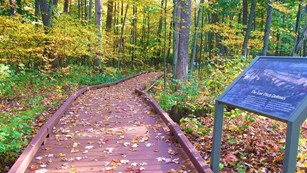 A brown, raised pathway winds amid a lush wooded area. An informational sign sits beside the path.