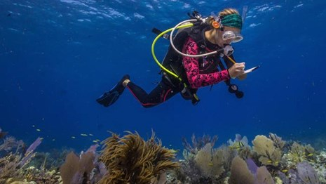 Diver in SCUBA gear observing coral and taking notes