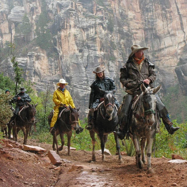 People riding through a foggy canyon on mules