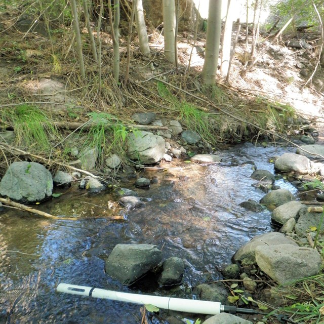 Small creek, lined with rocks and banks with sparse grass and litter cover, and a few saplings.
