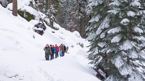 People hike through a snowy forest. Photo by Alison Taggart-Barone.