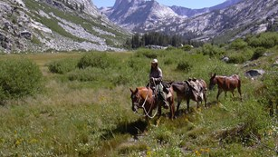 A woman on a horse in a high Sierra canyon
