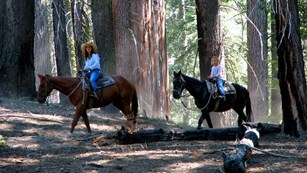 A woman and girl ride horses through the forest