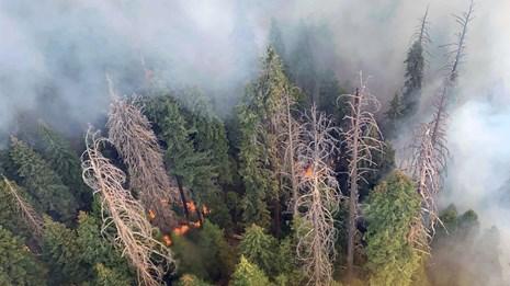 Wildfires shut Sequoia National Park, threaten world's biggest trees