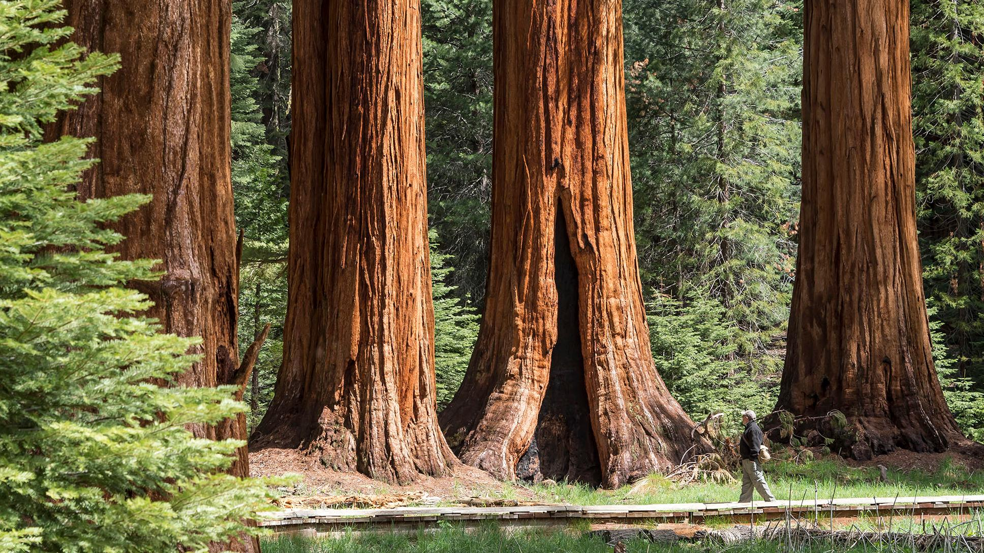 Sequoia /& Kings Canyon National Parks