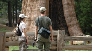 People stand near a sequoia with filming equipment