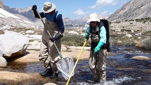 Two park field biologists use electrofishing to remove fish from a park lake outlet.