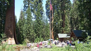View of the First Amendment area in the Giant Forest