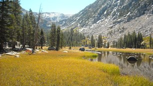 Wetland in Kings Canyon National Park