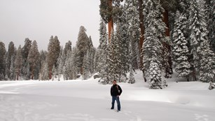 A man stands at the edge of a snow-covered meadow