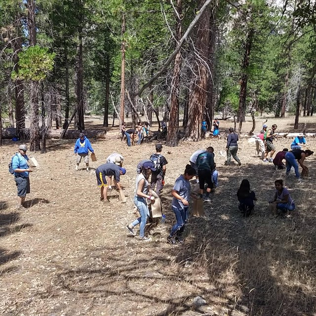 Nature Corps volunteers gather native plant seeds for use in restoration