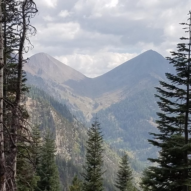 Conifer trees and the-shaped Farewell Gap pass in the background, Mineral King