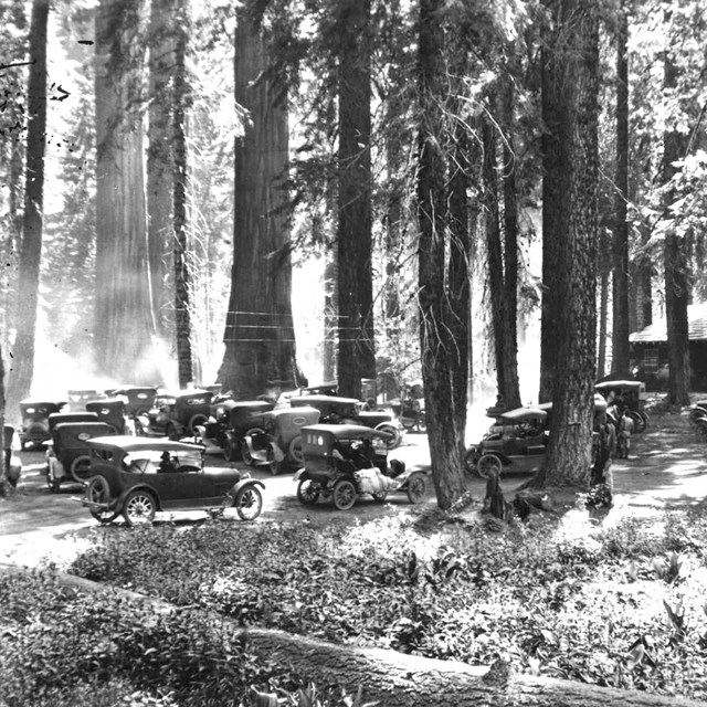 Early cars parked in the forest