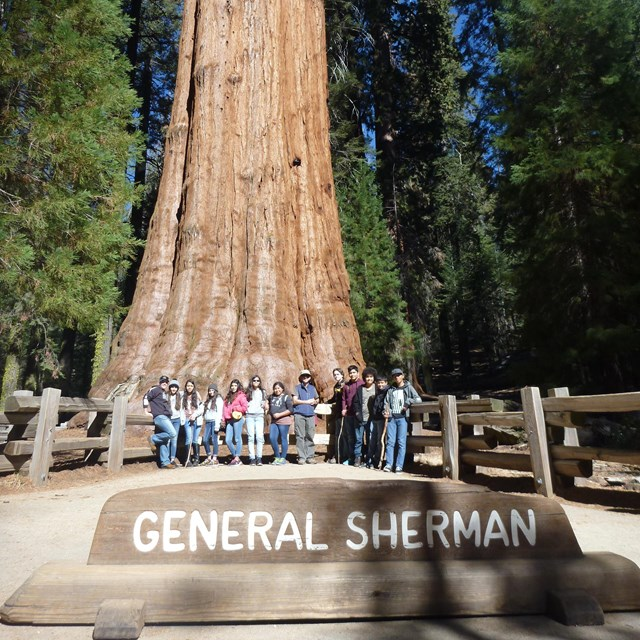 A group of students pose in front of a sequoia. A wooden sign in front reads