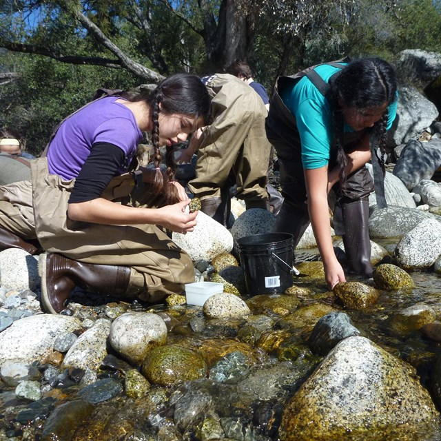 Two students wearing waders lean down to examine rocks in a creek