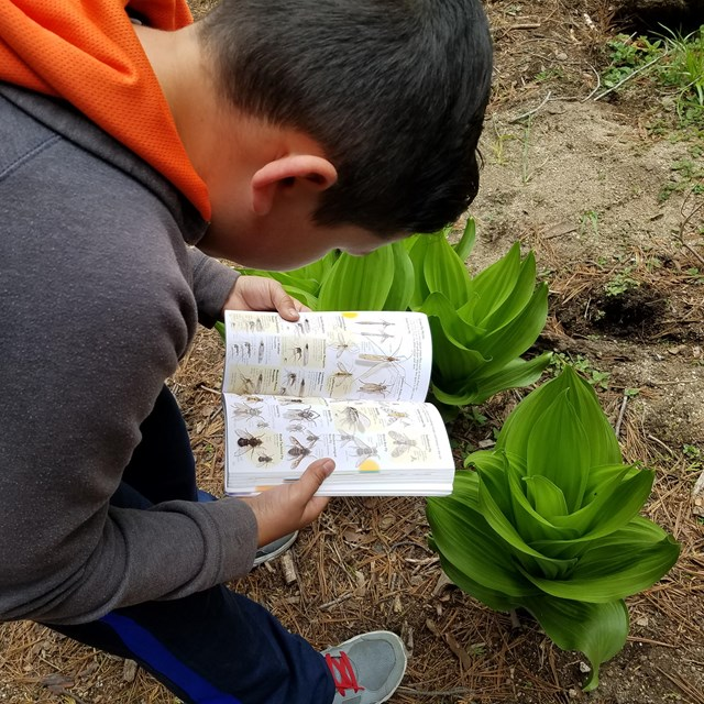 A child examines an identification guidebook in front of a plant