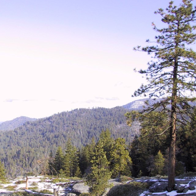 View of hazy air from Sequoia National Park.