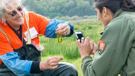 Researcher and National Park Service employee taking a picture of algae during a BioBlitz