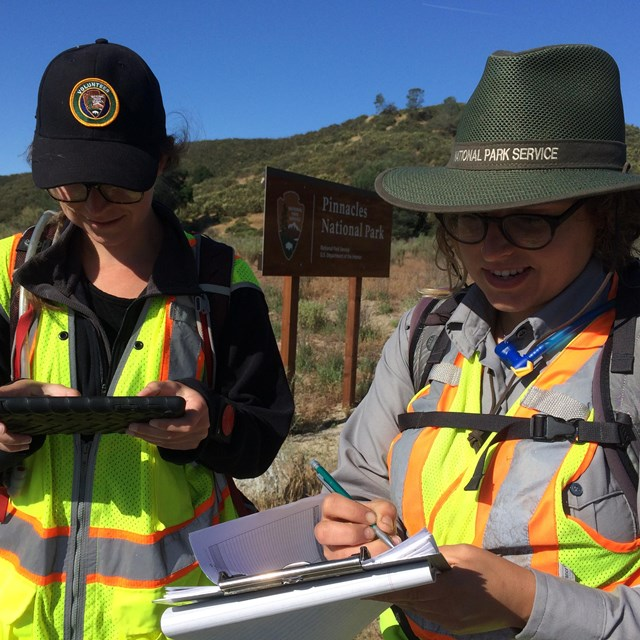 A National Park Service plant biologist and intern record data during an invasive plant survey