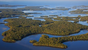 An aerial view of the Everglades National Park mangrove landscape.