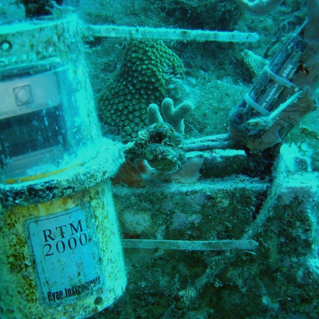 Scientist collecting coral reef water temperature data