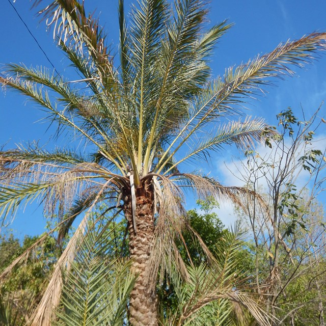 An exotic palm tree standing with other exotic plants