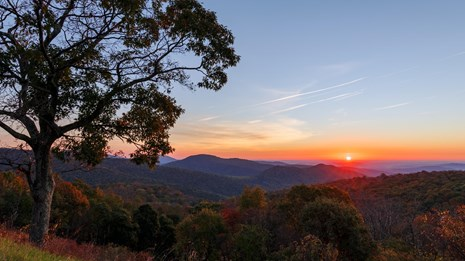 An orange sun rises creating bands of color over the mountain ridges. A large tree is in the foregro