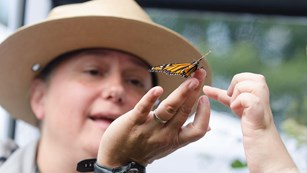 A ranger examines a yellow butterfly